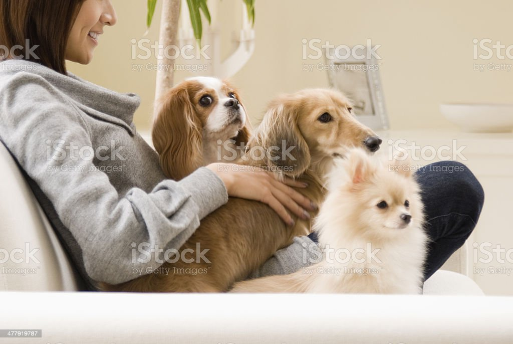 Dog and woman relaxing on sofa stock photo