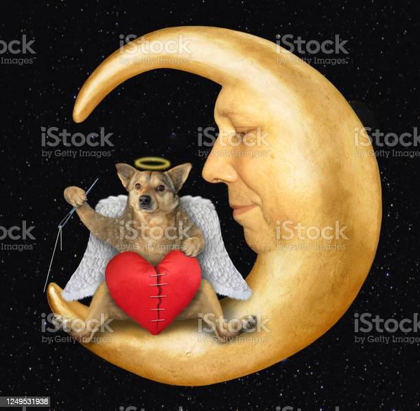 Photo of Dog angel mends broken heart 3