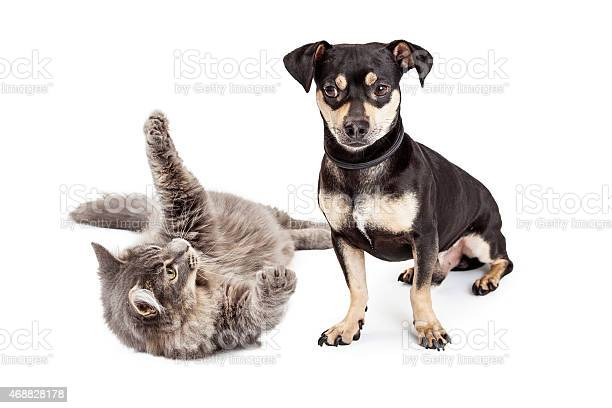 Dog annoyed with playful cat picture id468828178?b=1&k=6&m=468828178&s=612x612&h=d9qyiv jhm92llupuypulalgebydd ret2anm5pt vm=