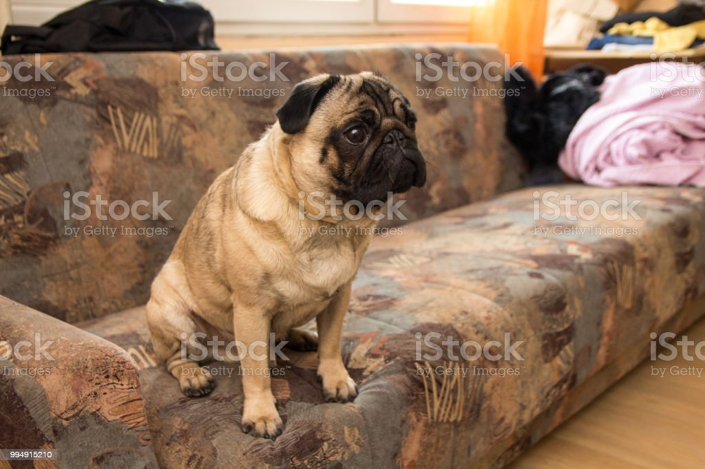 Dog are watching TV stock photo