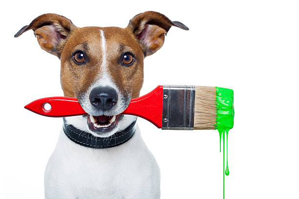 dog as a painter stock photo