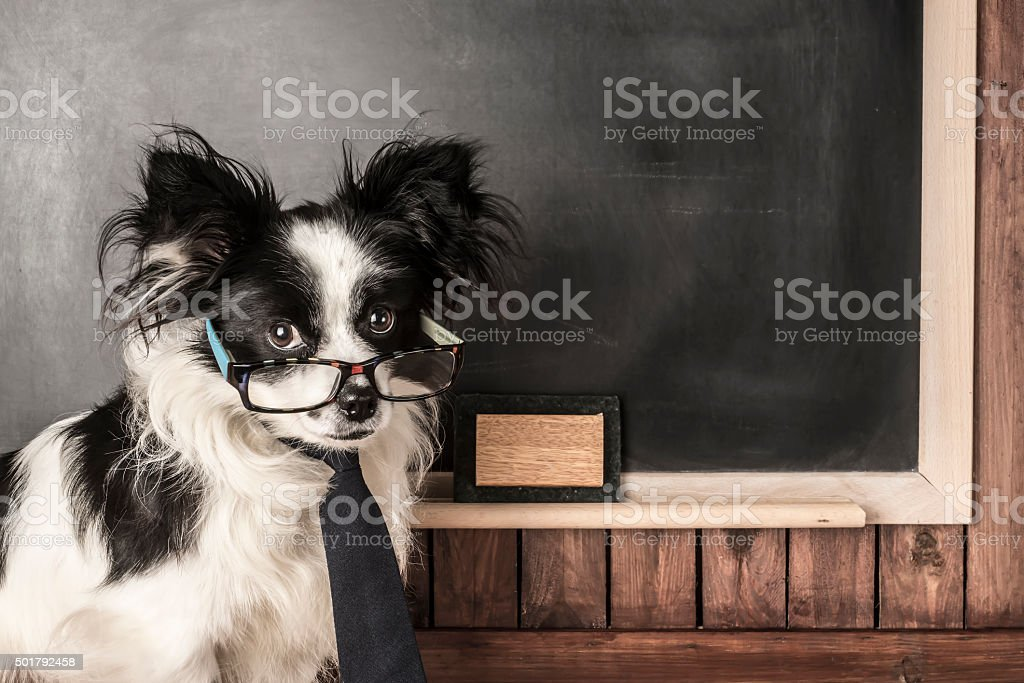 Dog as a school teacher with glasses and tie stock photo