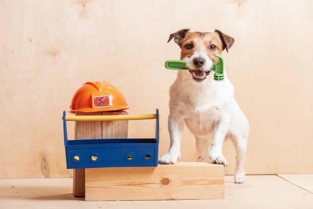 hund als amüsant builder halten hammer im mund stehen in der nähe von bauarbeiterhelm - hundezubehör diy stock-fotos und bilder