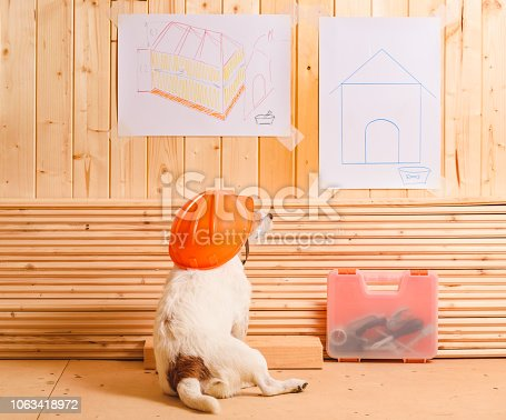 istock Dog as funny constructor with hardhat looking at blueprint of kennel 1063418972