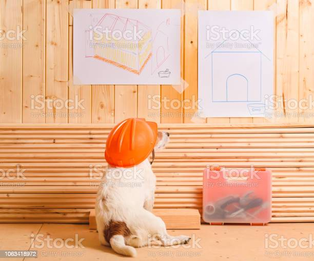 Dog as funny constructor with hardhat looking at blueprint of kennel picture id1063418972?b=1&k=6&m=1063418972&s=612x612&h=spu1unhujqrhf5pq9vbok7fygh3y2 pz8akw25eclng=