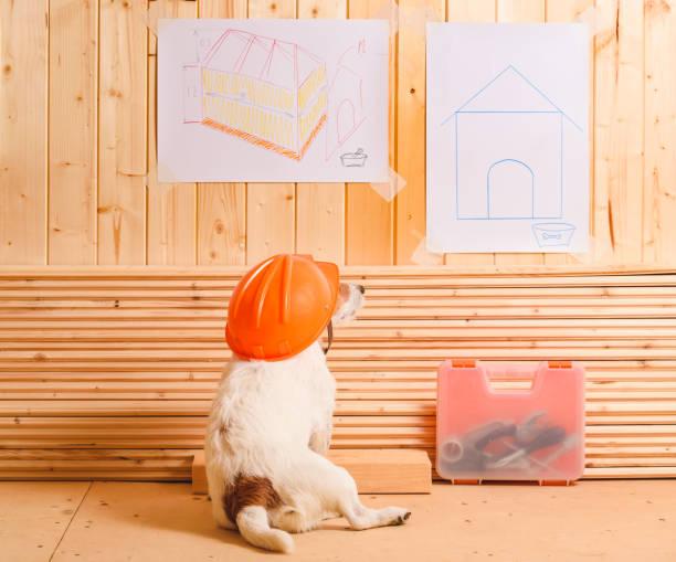 hund als lustige konstruktor mit bauarbeiterhelm blick auf blaupause des zwingers - hundezubehör diy stock-fotos und bilder