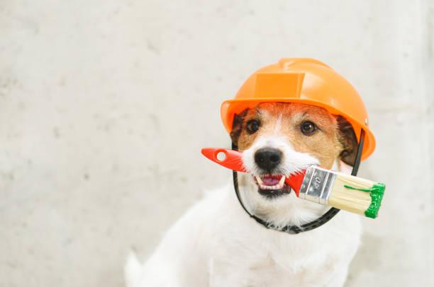 Hond als grappig huisschilder met penseel tegen betonnen muur foto