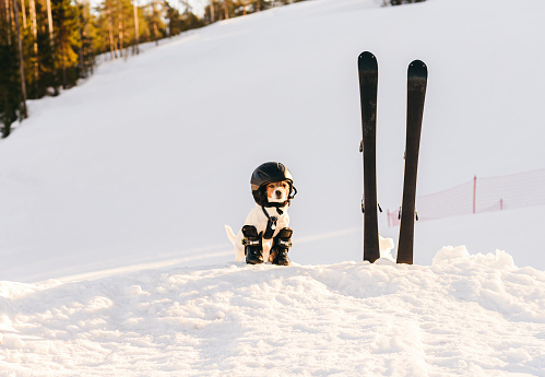 Dog as funny skier at mountain ski resort in Finland with full set of equipment