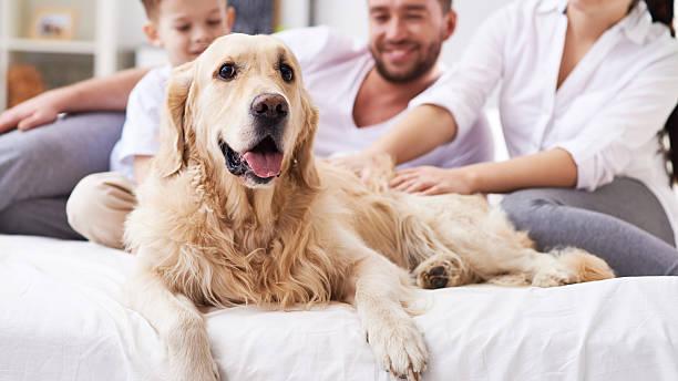 chien en tant que membre de la famille - canidés photos et images de collection