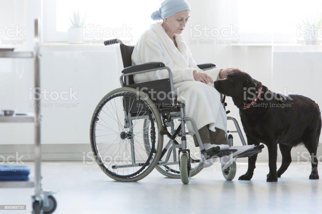 Dog assisting disabled senior woman stock photo