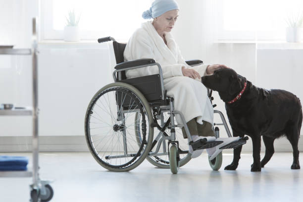 Dog assisting disabled senior woman stock photo