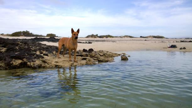 A dog at a beach – Foto