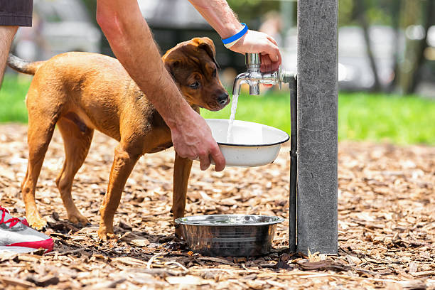 Dog at a water fountain stock photo