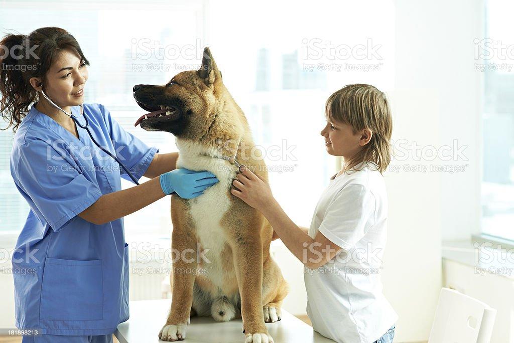 Dog at animal hospital royalty-free stock photo