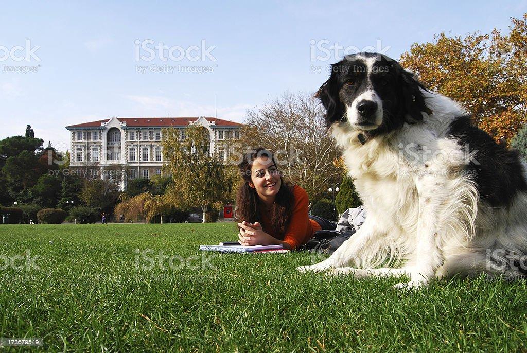dog at campus royalty-free stock photo