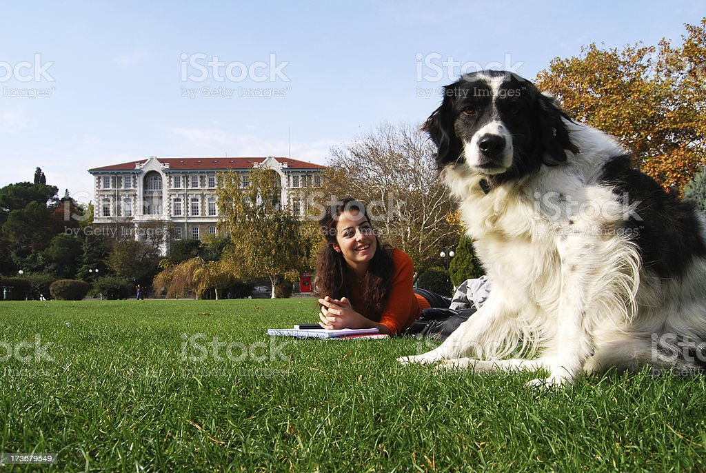 dog at campus stock photo