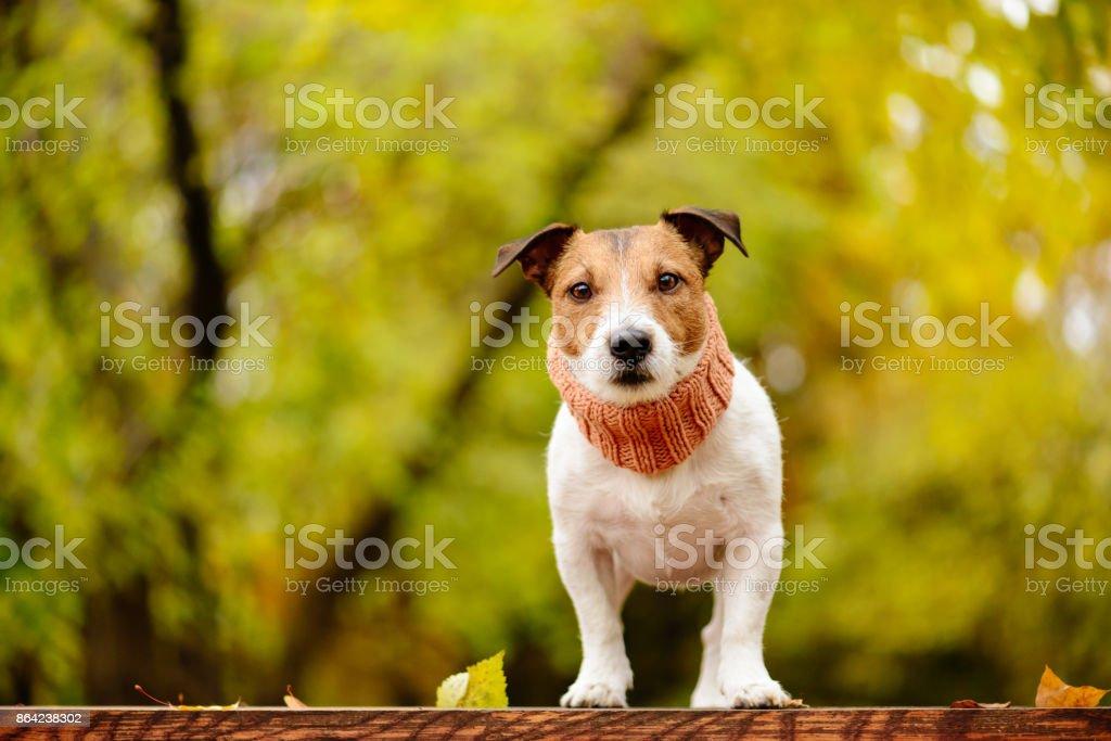 Dog at fall (autumn) park with lush foliage background royalty-free stock photo
