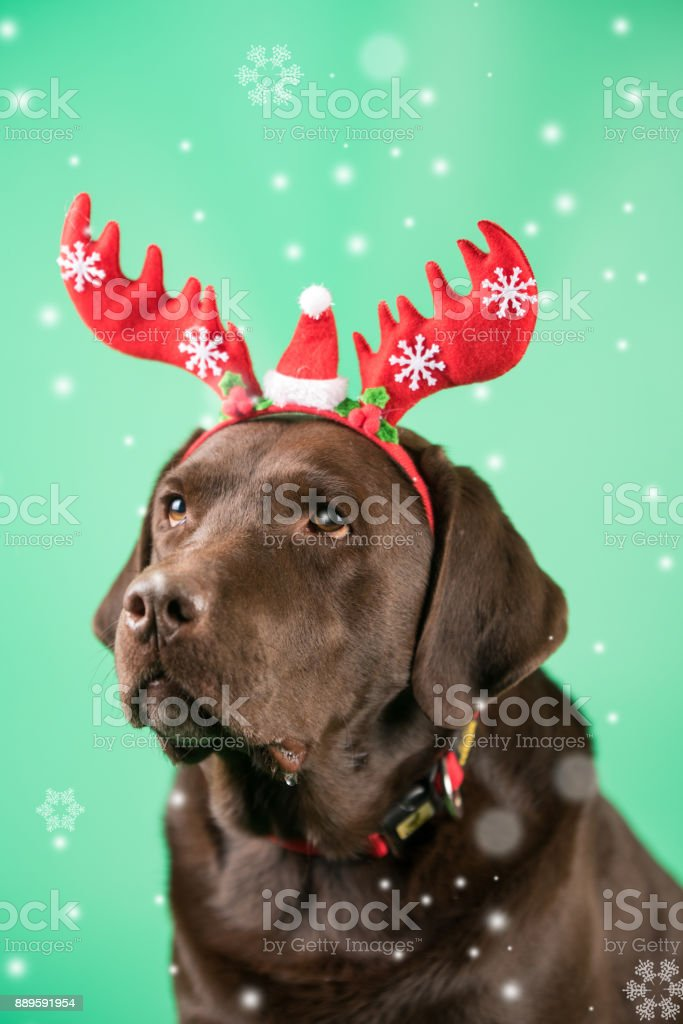 A dog at green background stock photo
