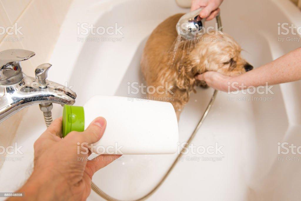 Dog at grooming salon having bath. stock photo