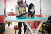 Groomer drying Bernese Mountain Dog puppy in his pet grooming salon.