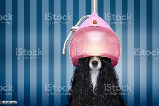 Dog at hairdressers salon picture id904240070?b=1&k=6&m=904240070&s=612x612&h=npnf9lvojlceiili1zdmdu9nchef3afbsx8sajuoyji=