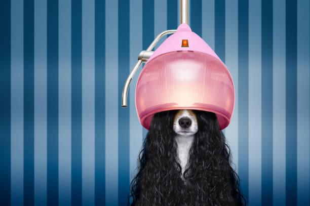 Dog at hairdressers salon picture id904240070?b=1&k=6&m=904240070&s=612x612&w=0&h=v3vo6mma4mk0wkcnoufmjldmyimyvfms7xcxhylxlme=