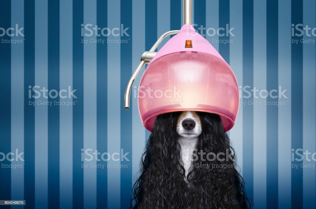 Hund beim Friseur salon – Foto