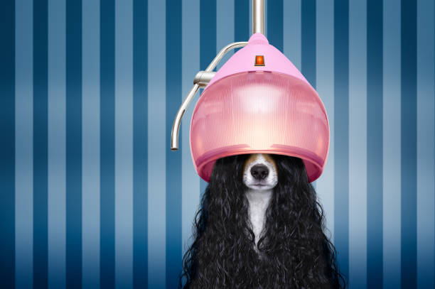 hund beim friseur salon - haarfön stock-fotos und bilder