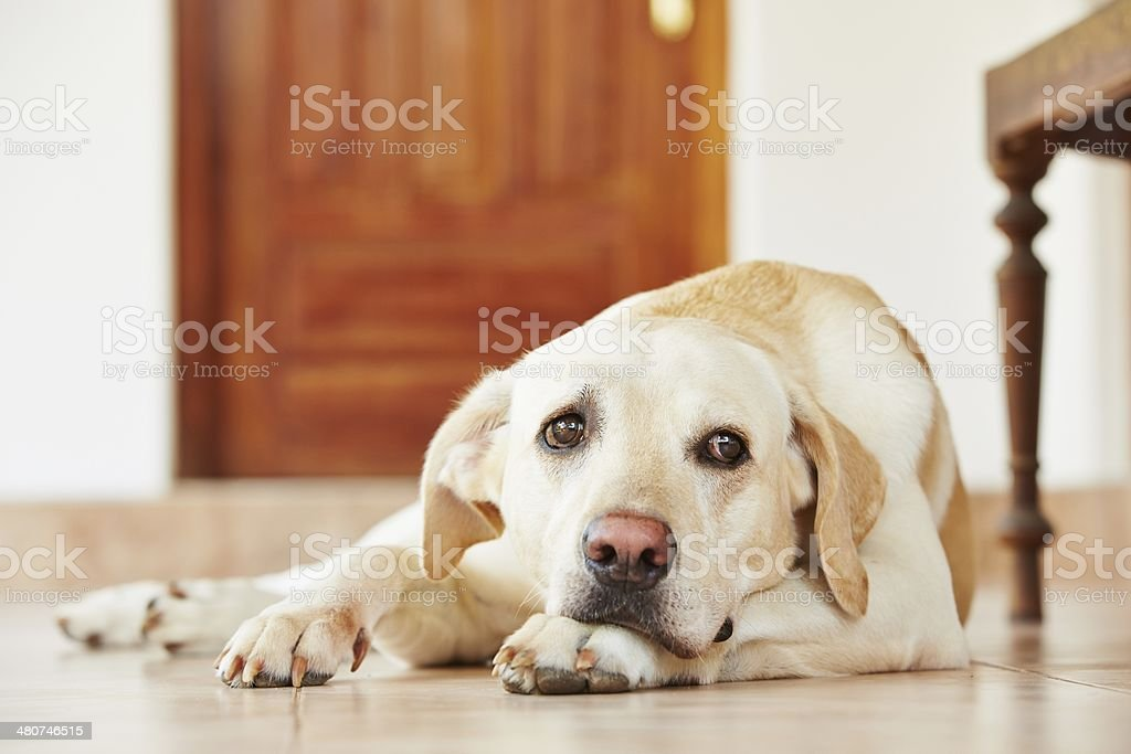 Dog at home stock photo