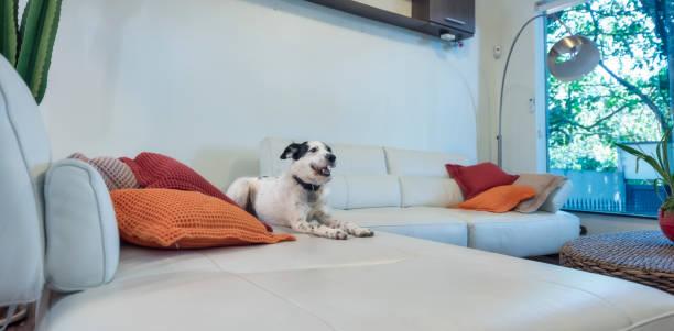 Hund wie zu Hause fühlen.   – Foto