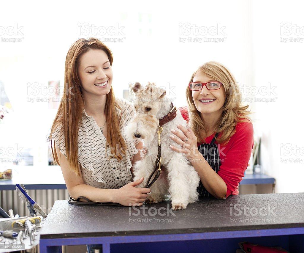 Dog at Pet Grooming Salon royalty-free stock photo