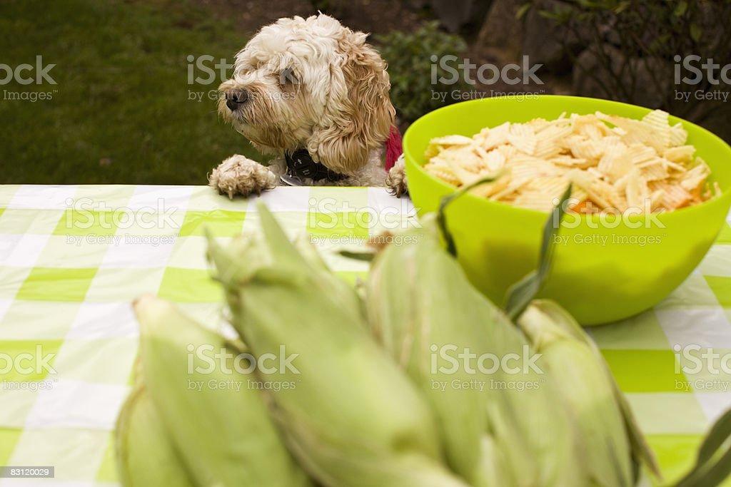 Pies na Stół piknikowy zbiór zdjęć royalty-free