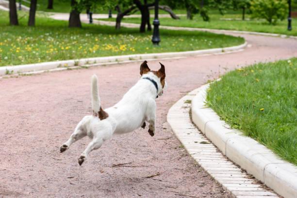 Dog at spring park running from camera having fun outdoors picture id927426572?b=1&k=6&m=927426572&s=612x612&w=0&h=21dtq1d7qyv3r6qzc5sogqaem1adap6cacas5pubdse=