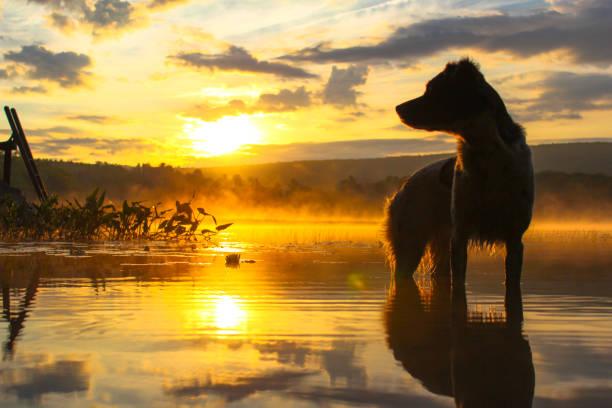 Dog at sunrise picture id1049916734?b=1&k=6&m=1049916734&s=612x612&w=0&h=8p5nc5bznxzmhapsivft6v5pxslhcxsogonluiszt7m=