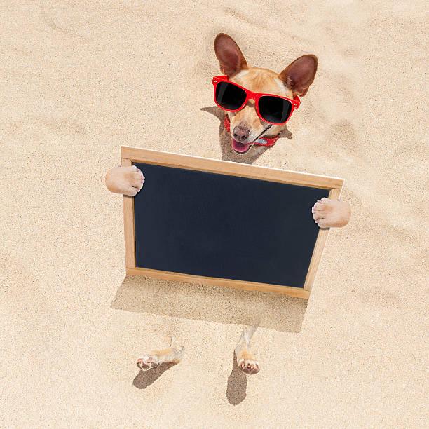 dog at the beach and banner - newspaper beach stockfoto's en -beelden