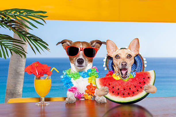 dog at the beach and watermelon - foto stock