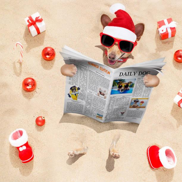 hond op het strand en watermeloen - newspaper beach stockfoto's en -beelden