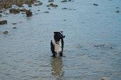 Dog, Puppy, Pets, Summer, Sand