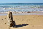 istock Dog at the beach 1211638989
