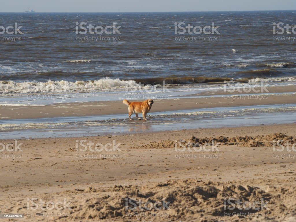 Hond op het strand - Royalty-free Buitenopname Stockfoto