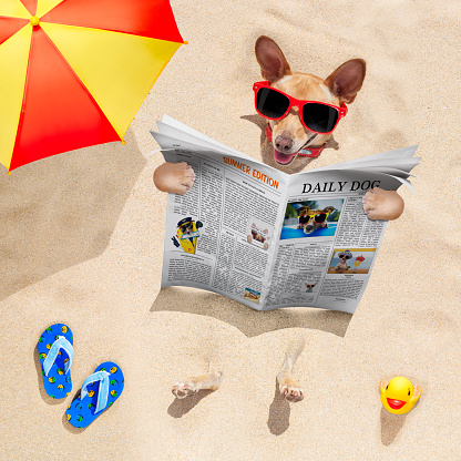 531058808 istock photo dog at the beach reads newspaper 547498876