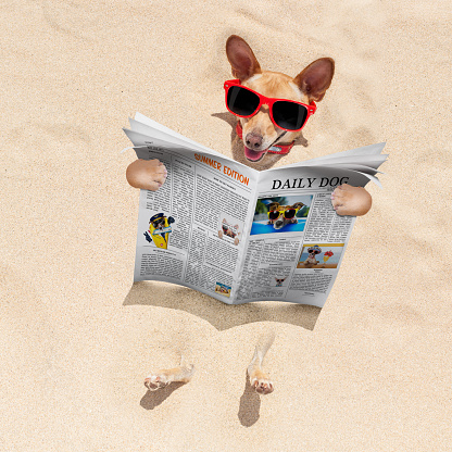 531058808 istock photo dog at the beach reads newspaper 579226630