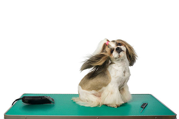 Dog at the groomer's table with winded hair – Foto