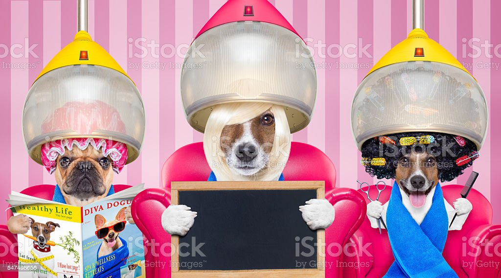 dog at the  hairdressers or groomer stock photo