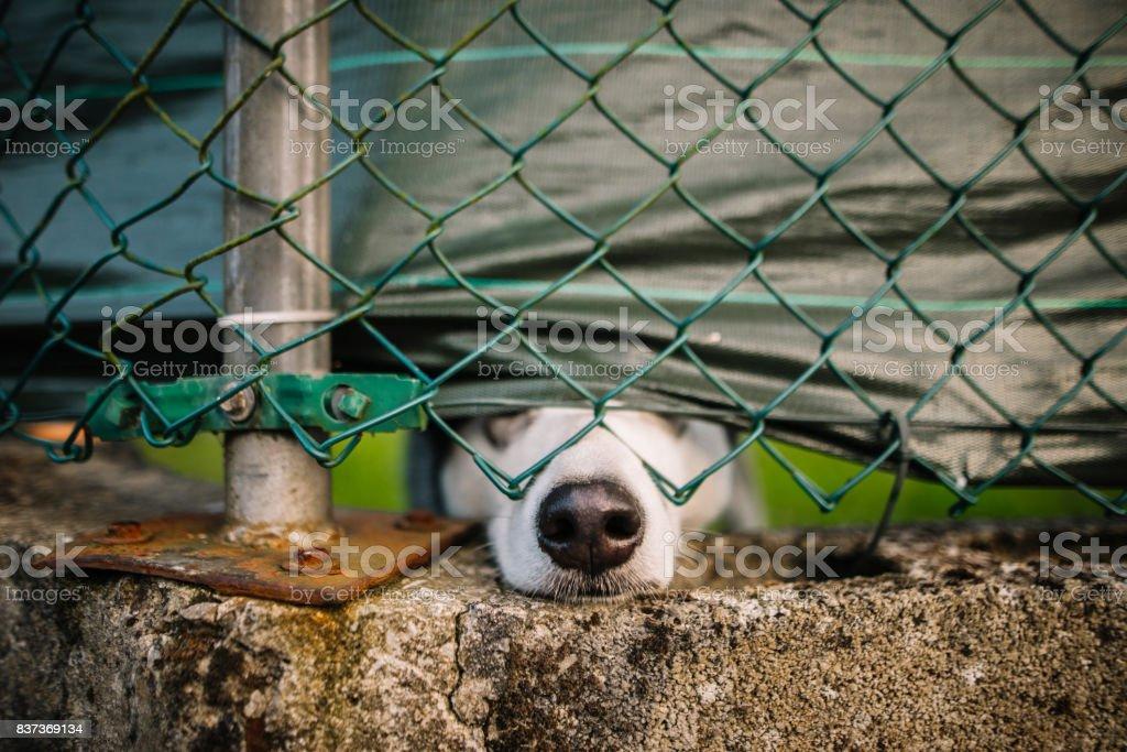 Köpek çitin diğer tarafında stok fotoğrafı
