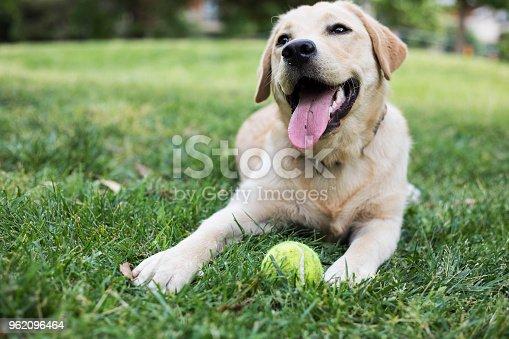 Dog at the park