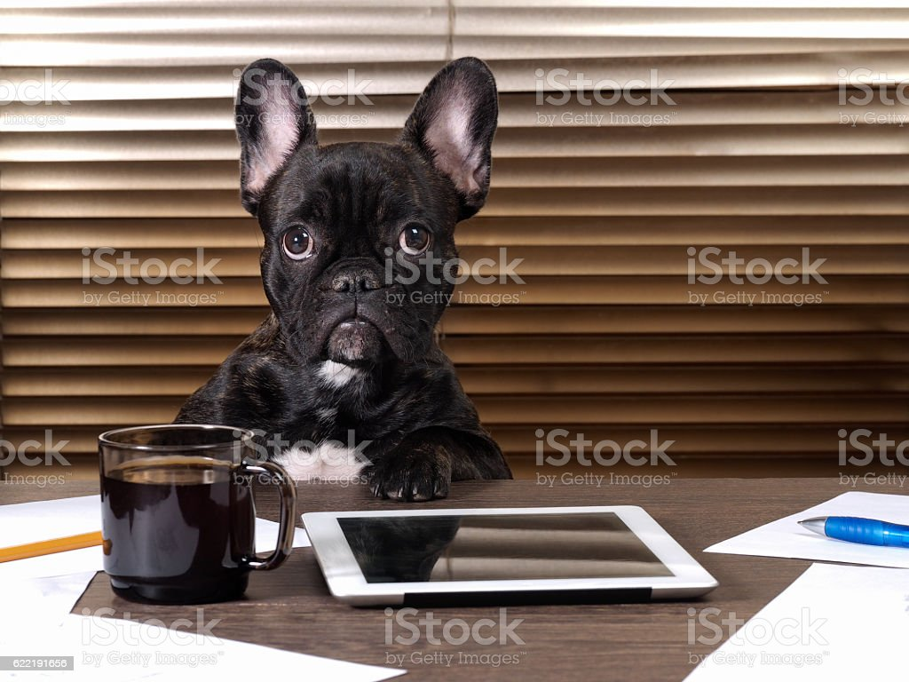 Dog at the table in the office stock photo