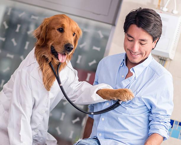 Dog at the vet picture id521006583?b=1&k=6&m=521006583&s=612x612&w=0&h=1wm0fdnva0a5fbzfzocn4xwn ioalllxbdrrtjfze5q=