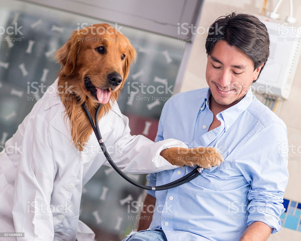 Dog at the Vet stock photo