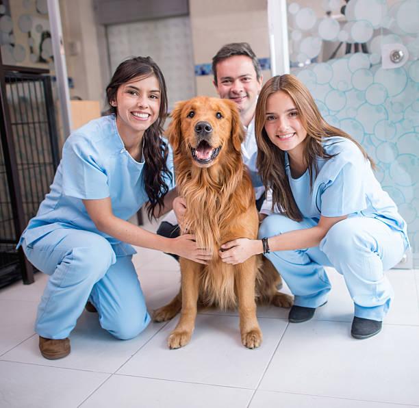 Dog at the vet picture id521072827?b=1&k=6&m=521072827&s=612x612&w=0&h=0jbwa9fgu9s4nxefrjtc4vylc7r7y8wfoqeab4v6pko=